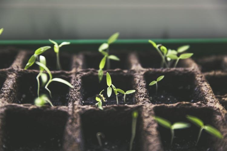 How to nurture self-growth