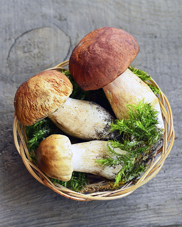 Mushroom hunting season